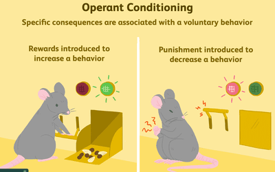2794863-operant-conditioning-a21-5b242abe8e1b6e0036fafff6.png